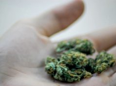 Marijuana (Photo: Katheirne Hitt/Flickr)