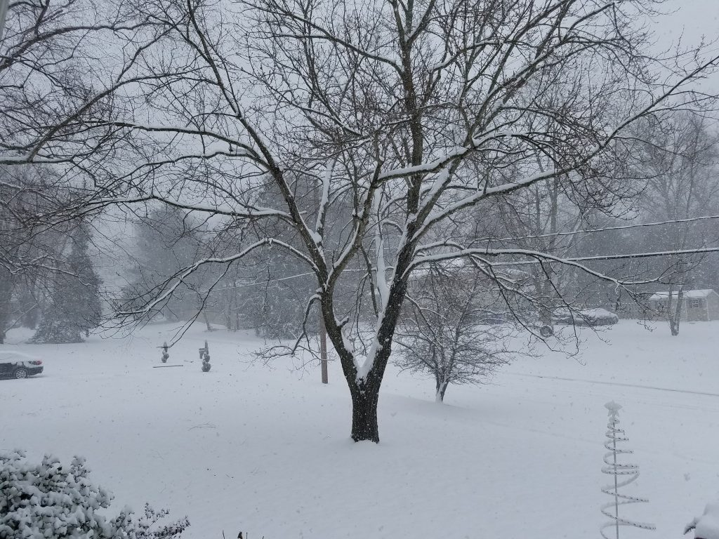 The Jan. 7, 2017 snow storm in Ocean County, NJ. (Photo: Patricia Nee)