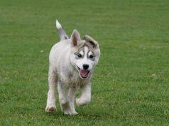 A dog running in a park. (Credit: Randi Hausken/Flickr)