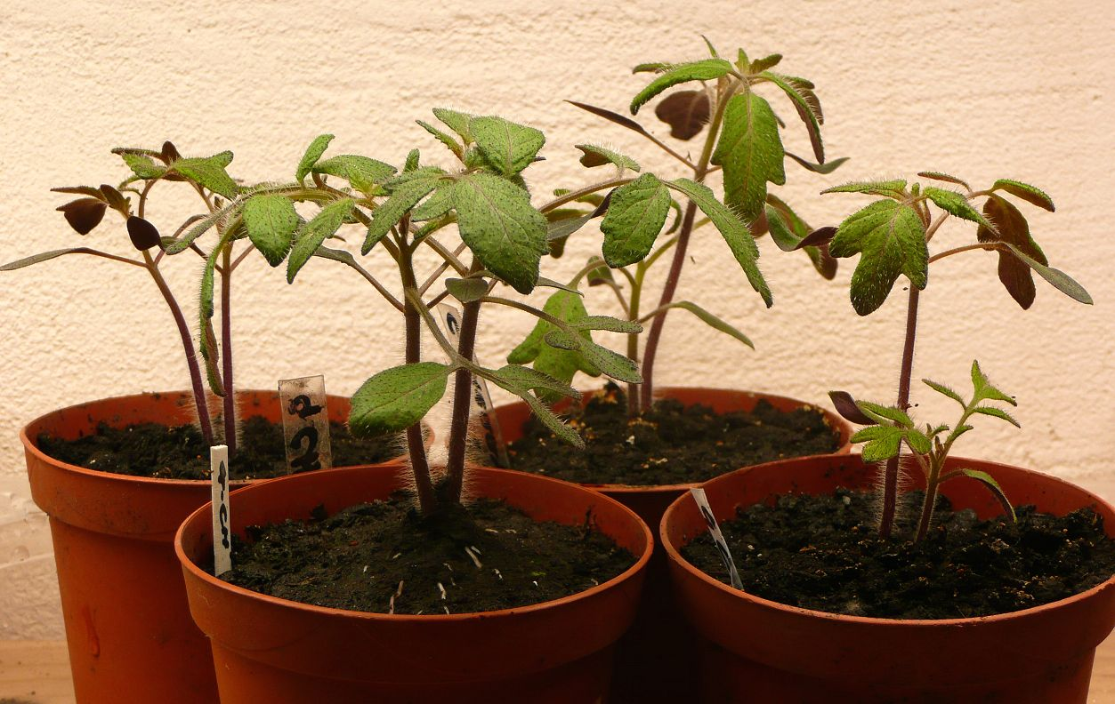 Tree Seedlings (File Photo/Flickr)