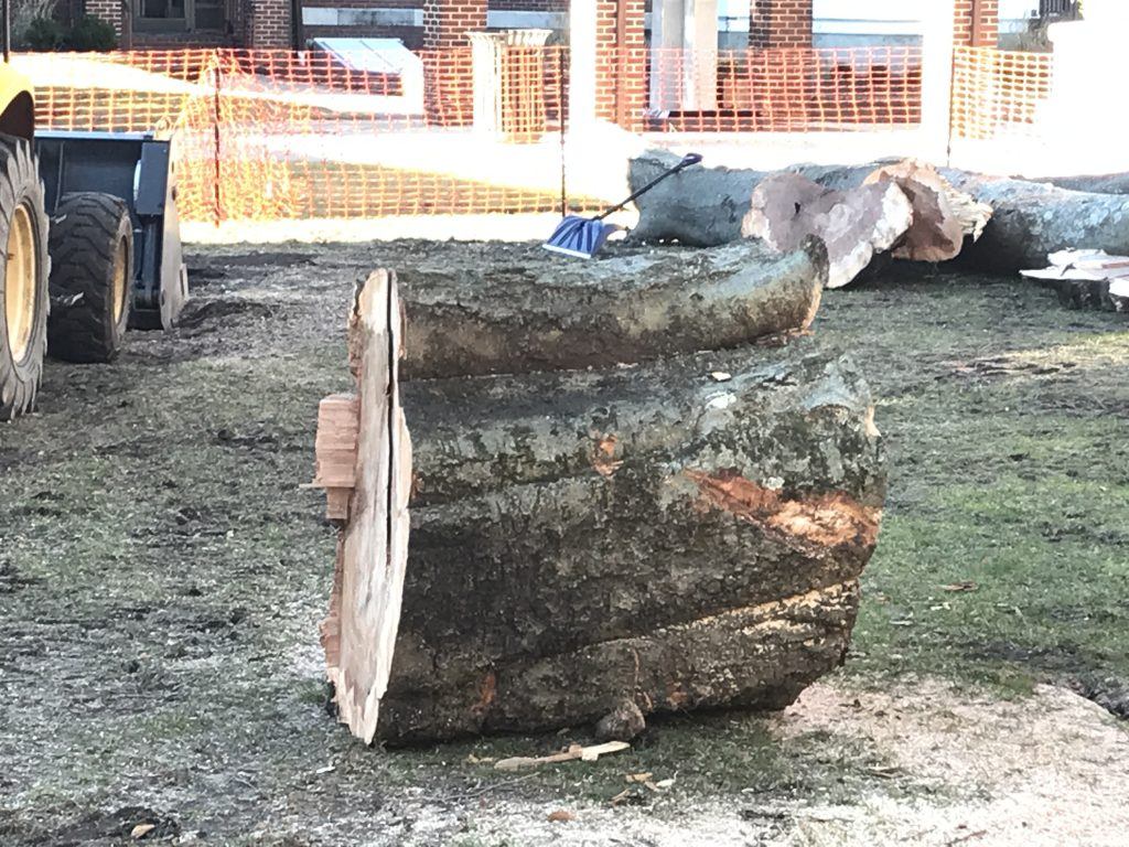 The remnants of a nearly century-old tree cut down in Toms River, Dec. 4, 2018. (Photo: Daniel Nee)