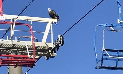 Bald eagles made an appearance on the Seaside Heights boardwalk Oct. 19, 2021. (Credit: Diane Il Grande)